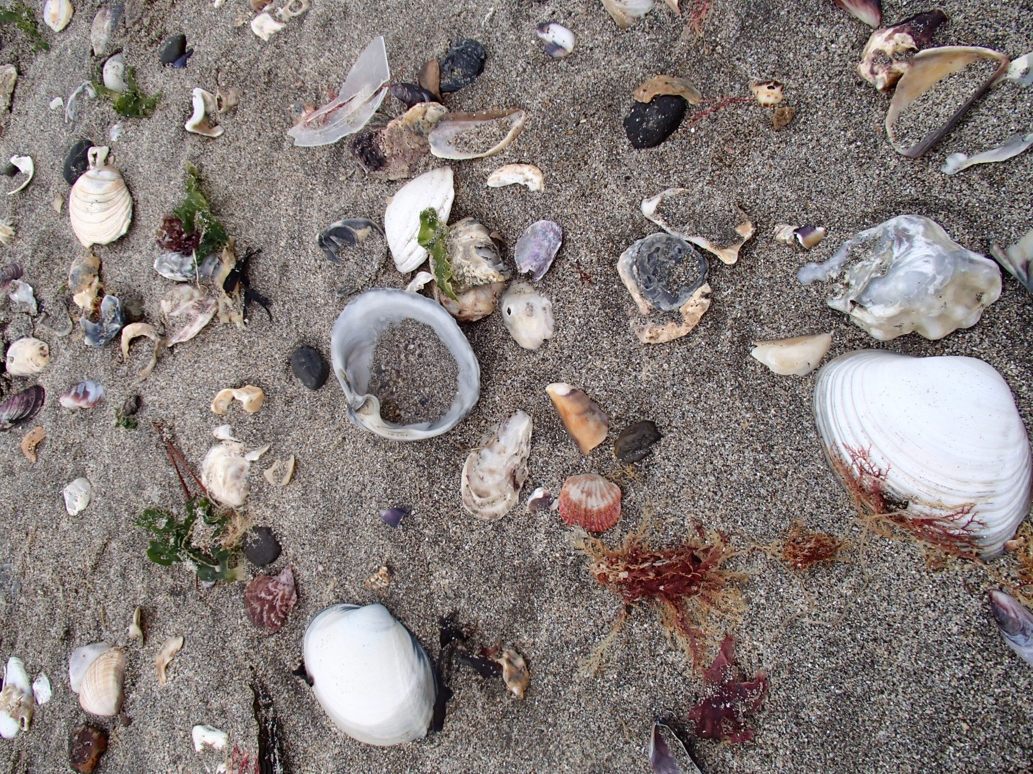 海に通うことにハマった時に取った砂浜の貝の写真